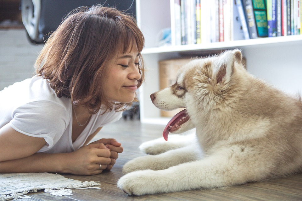 The Benefits Of In-Home Pet Care For Your Pet and Your Lifestyle