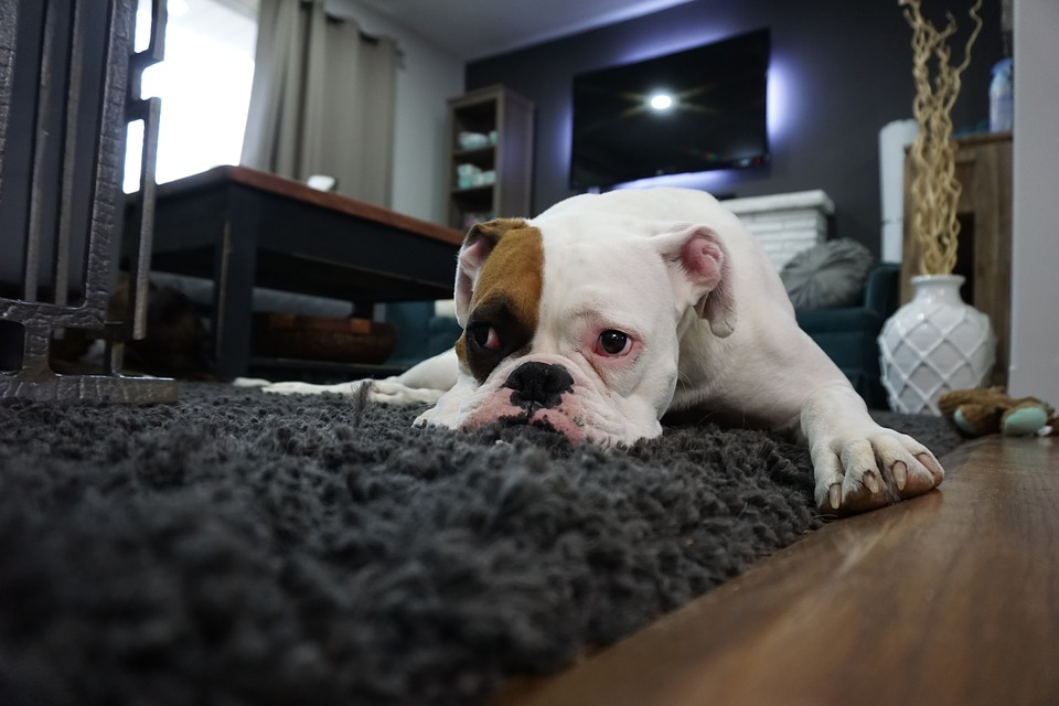 Types Of Dogs That Benefit From In-Home Pet Care