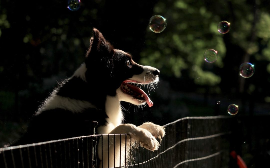 The Positive Side Effects Of Dog Parks