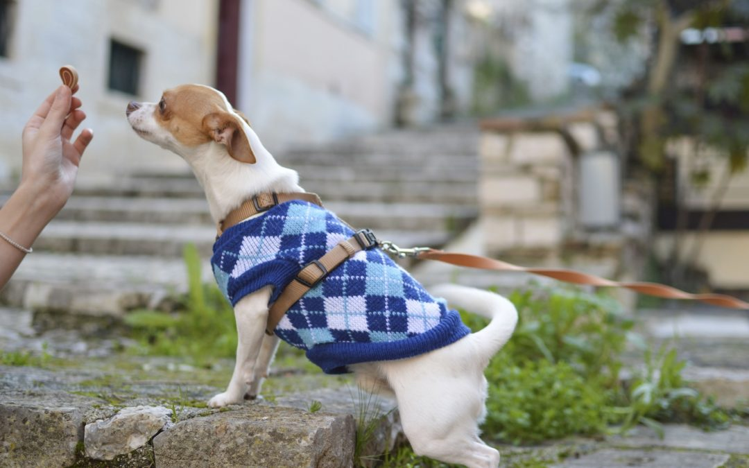 dressing up your dog